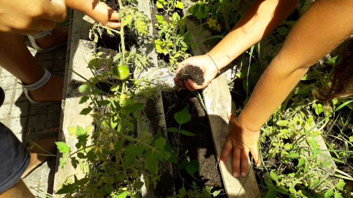 Progetto Civica, agricoltura sociale ed educazione ambientale